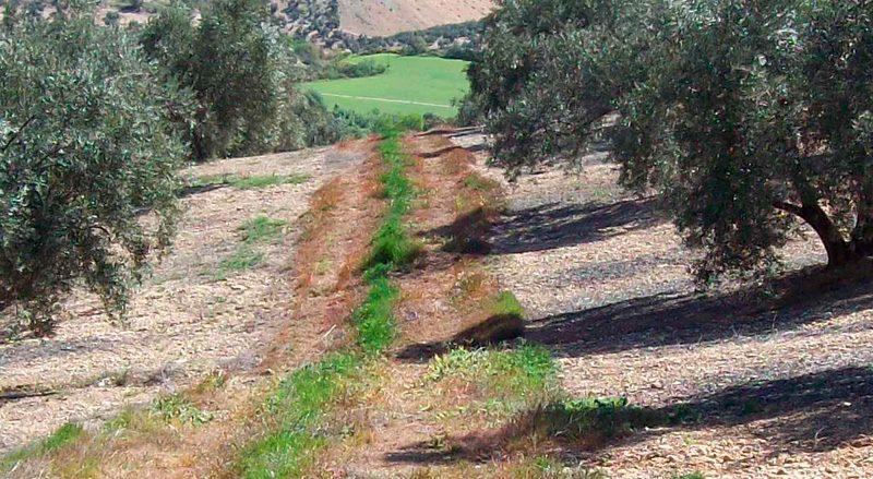 cabeceras-seccion-erosion