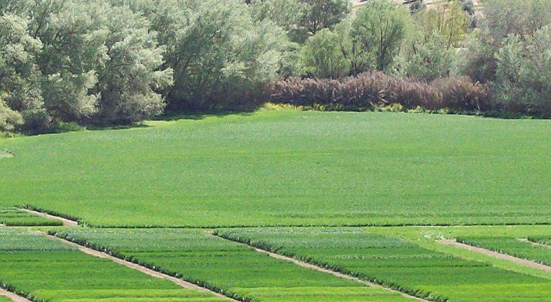 cabeceras-seccion-grupo-agrosa