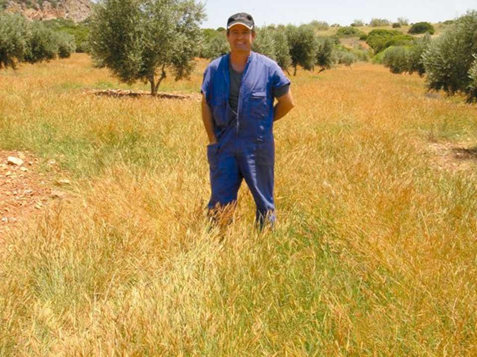 Comenzando a secarse en verano. Campo en Albacete.