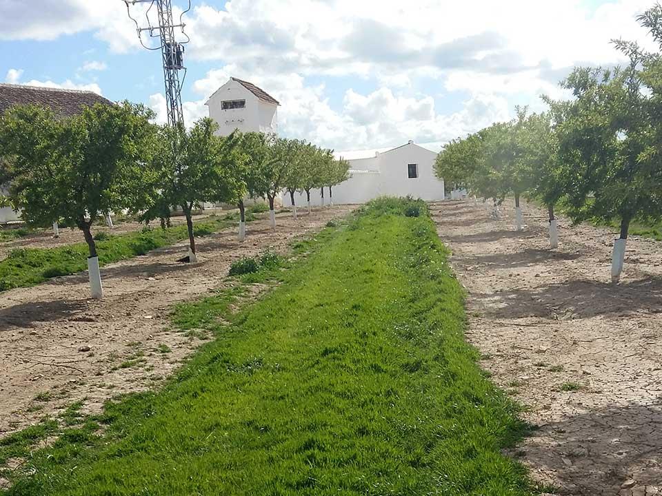 Cubierta 1er año en campo de almendros en Antequera (Malaga)
